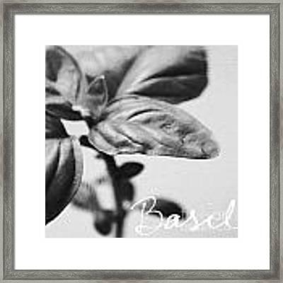 Basil Framed Print by Linda Woods