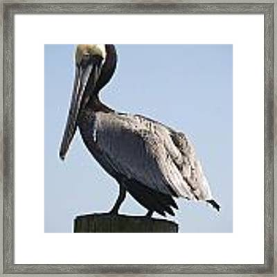 Big Bird Framed Print by Ralph Jones
