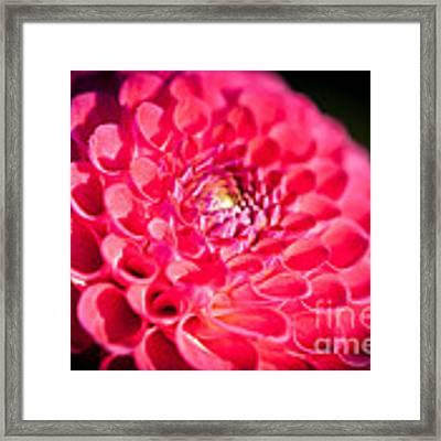 Blooming Red Flower Framed Print by John Wadleigh