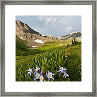 Handie's Peak And Blue Columbine On A Summer Morning Framed Print by Cascade Colors