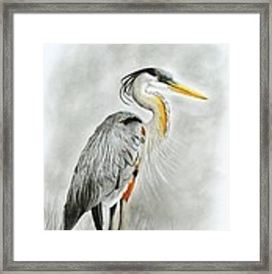 Blue Heron 3 Framed Print by Phyllis Howard