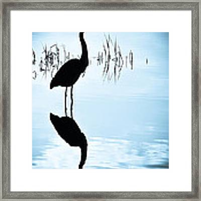 Blue Herons Framed Print by Francis Trudeau