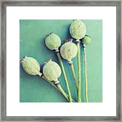 Bouquet Of Pods Framed Print by Lupen  Grainne