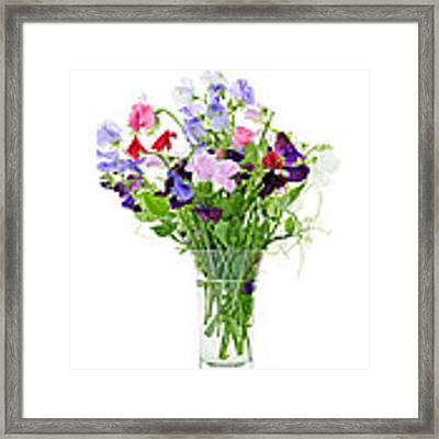 Bouquet Of Sweet Pea Flowers Framed Print