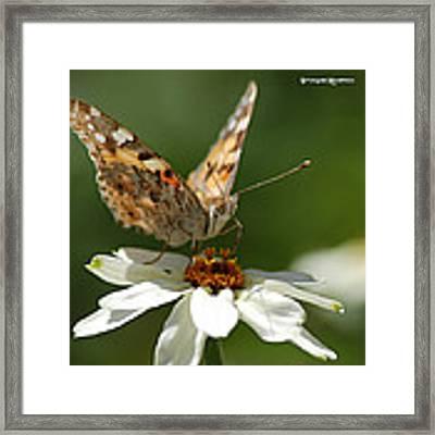 Butterfly Macro Photography Framed Print by Stwayne Keubrick