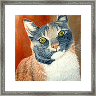 Calico Cat Framed Print by Karen Zuk Rosenblatt