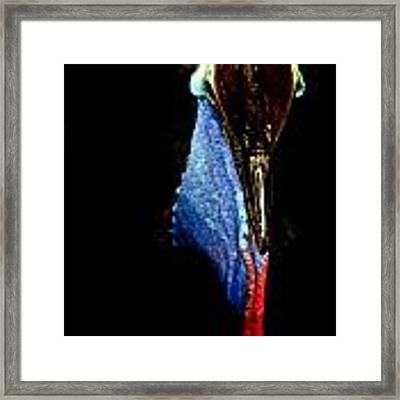 Cassowary Portrait 2014 Framed Print by Debbie Cundy
