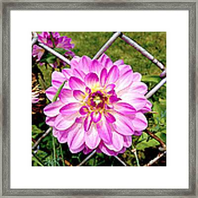Chain Link Bloom Framed Print by Meghan OHare