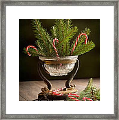 Christmas Pine Framed Print by Amanda Elwell