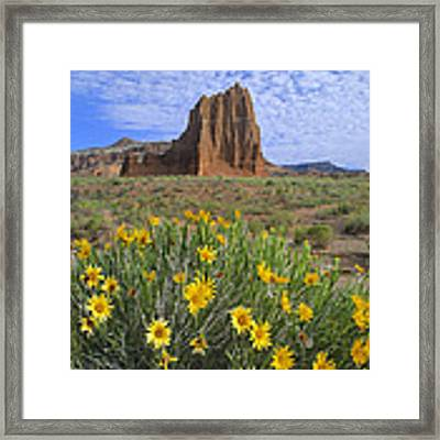 Common Sunflowers And  Temple Of The Sun Framed Print by Tim Fitzharris