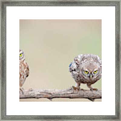 Curiosity Of Chick Framed Print by E.amer