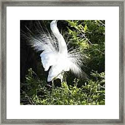 Dancing Framed Print by Ralph Jones