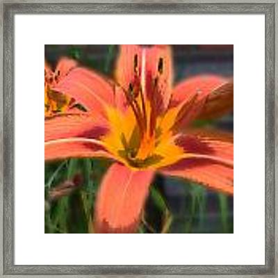 Day Lilly Framed Print by David Armstrong