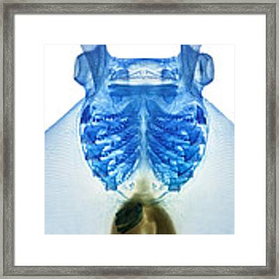 Devil Ray Framed Print by Adam Summers