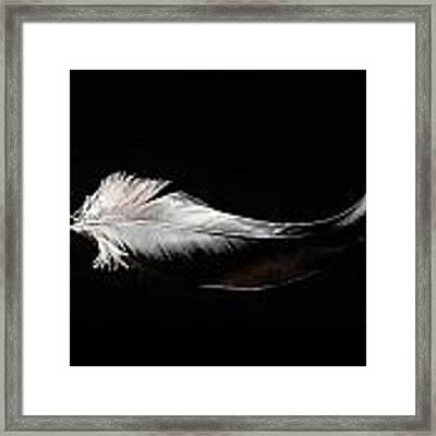 Domiselle Crane Framed Print by Chris Maynard