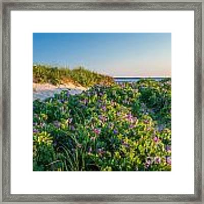 Eastham Wildflower Walk Framed Print by Susan Cole Kelly