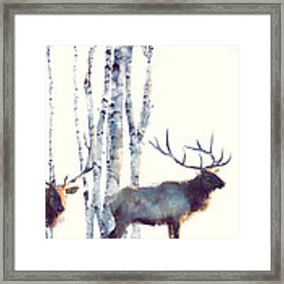 Elk // Follow Framed Print