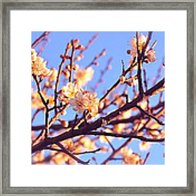 Exquisite Framed Print by HweeYen Ong