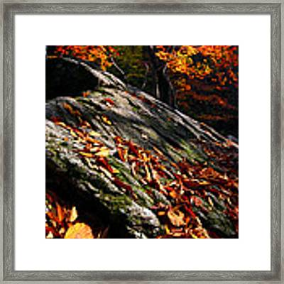 Fall In Gyeryongsan Framed Print by Brad Brizek