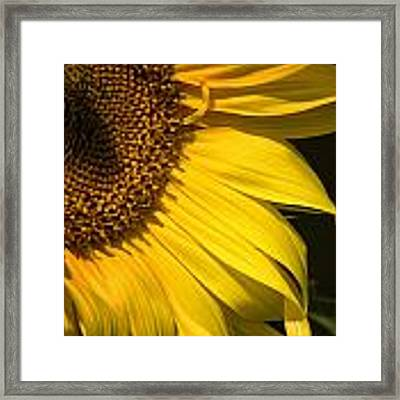 Find The Spider In The Sunflower Framed Print by Belinda Greb