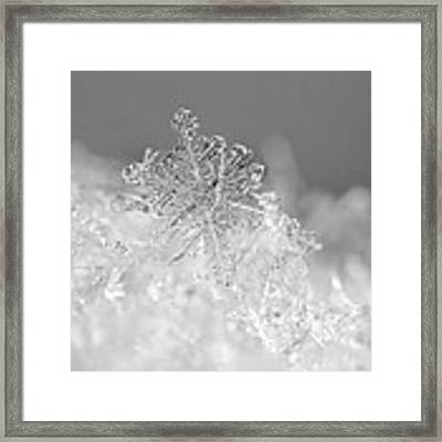 First Snowflake Framed Print by Rona Black