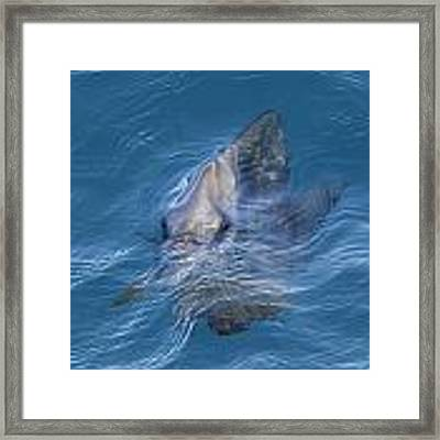 Fish Face Framed Print by Debbie Cundy