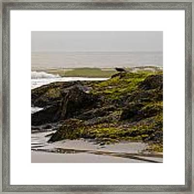 Flight Jitters Framed Print by Francis Trudeau