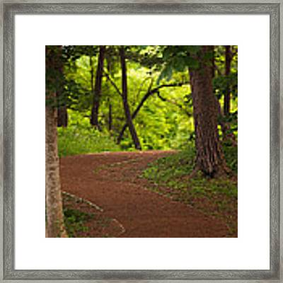 Forest Path Framed Print by Brad Brizek