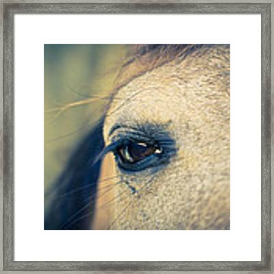 Gentle Eye Framed Print by Priya Ghose