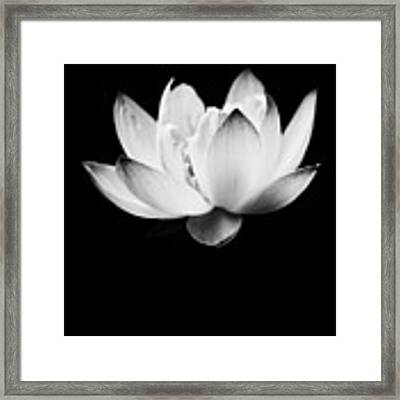 Ghost Lotus Framed Print by Priya Ghose