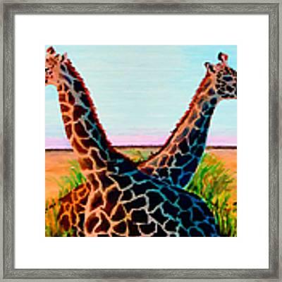 Giraffes Framed Print by Donna Proctor
