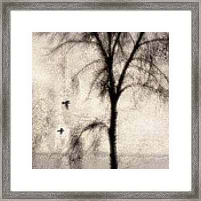 Glimpse Of A Coastal Pine Framed Print