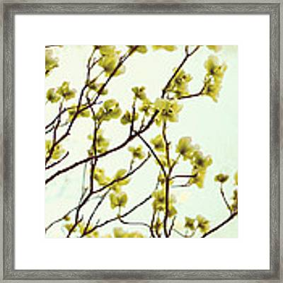 Green Dogwood Framed Print