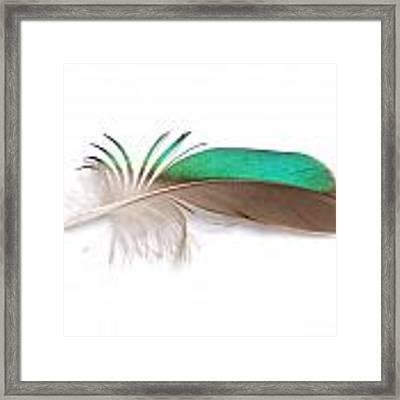 Green-winged Teal  Framed Print