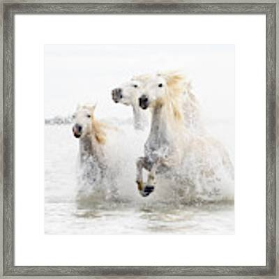 Horses  Hight Key Framed Print by Ciro De Simone