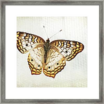 Illuminated Wings Framed Print by Lupen  Grainne