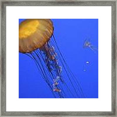 In The Tank Framed Print by Ralph Jones