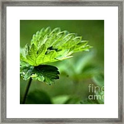 Just Green Framed Print by Jeremy Hayden