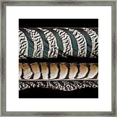 Lady Amherst Framed Print