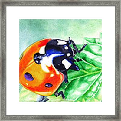 Ladybug On The Leaf Framed Print by Irina Sztukowski