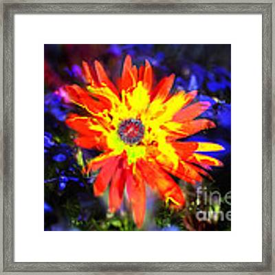 Lily In Vivd Colors Framed Print by Gunter Nezhoda
