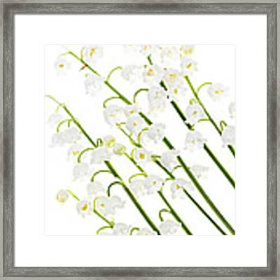 Lily-of-the-valley Flowers Framed Print