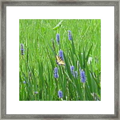 Monarch Of The Lake Framed Print by Barbara Von Pagel