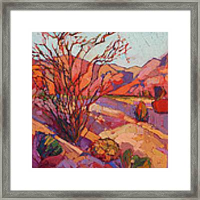 Ocotillo Shadows Framed Print