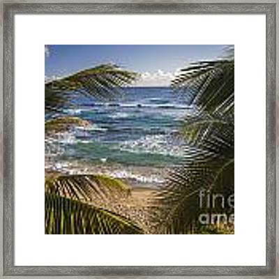 Palm Trees On Isabel Beach In Puerto Rico Framed Print by Bryan Mullennix