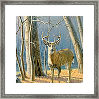Pre-flight- Whitetail Buck Framed Print