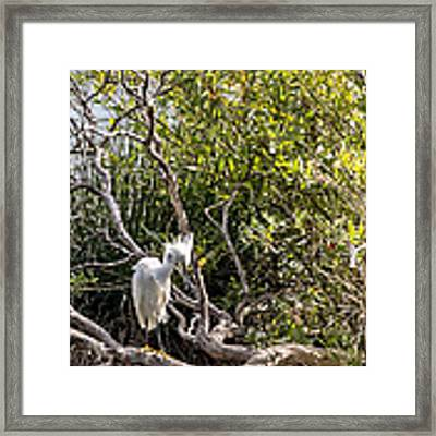 Punk 'do Framed Print by Kate Brown
