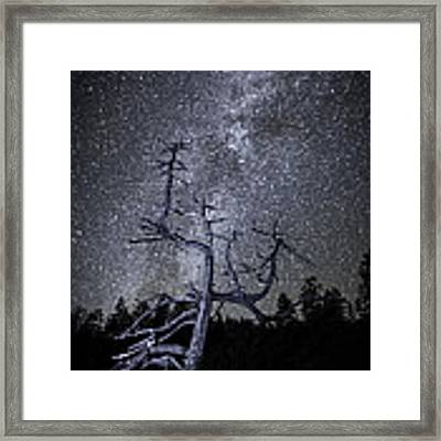 Reaching For The Stars Framed Print by Nancy Strahinic