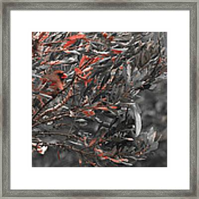 Red Camo Framed Print by Francis Trudeau