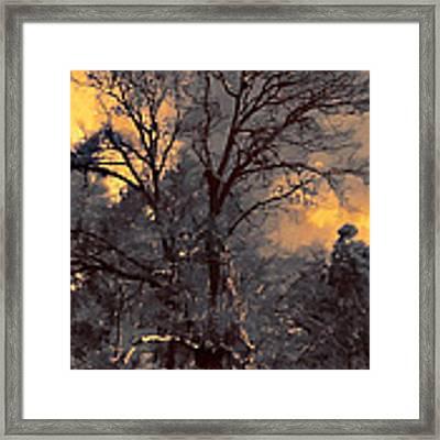 Rembrandt's Tree Framed Print by Douglas MooreZart